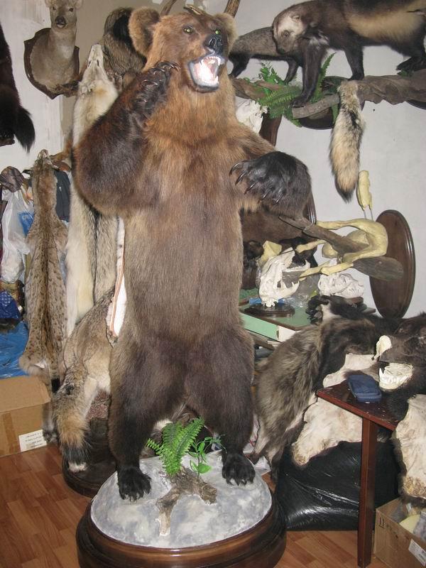 Чучело медведя своими руками
