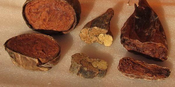 струя бобра при различном питании