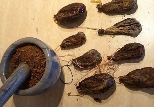 сушеная и истолченная бобровая струя
