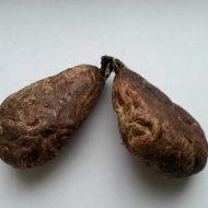 🚩 Лечебные свойства бобровой струи ⚕️
