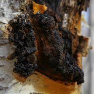 Лечебные свойства грибов при лечении заболеваний желудка