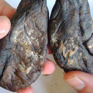 Струя бобра – как законсервировать (засушить) продукт для дальнейшего употребления?